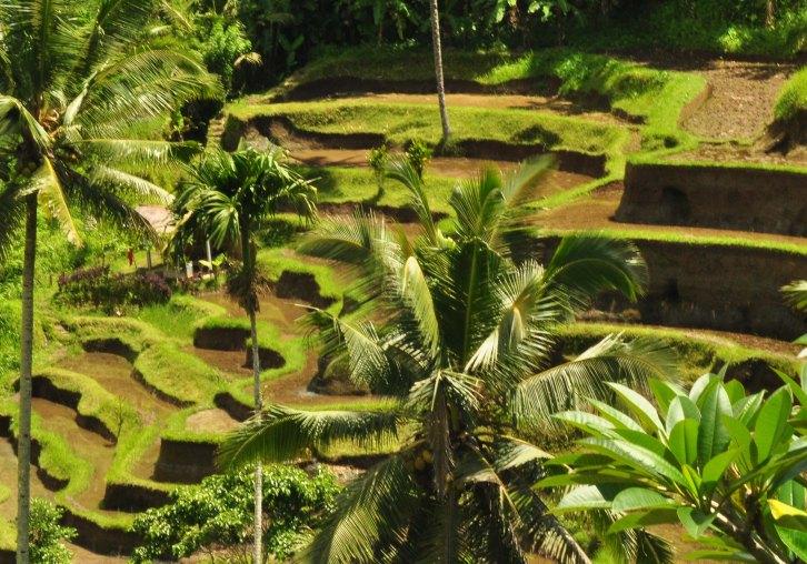 Terasiring Ubud Bali